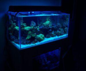 120 Rimless Starphire Reef Ready
